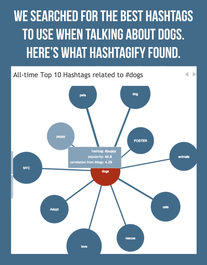 Graphic of the top 10 hashtags related to dogs. Screenshot generated by Hashtagify.